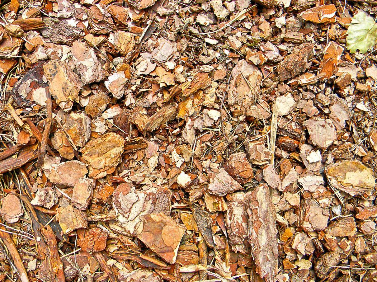 Brykiet drzewny – biopaliwo powstałe z odpadów drzewnych